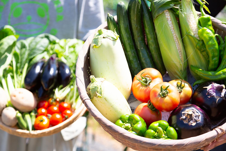野菜 田舎生活 移住